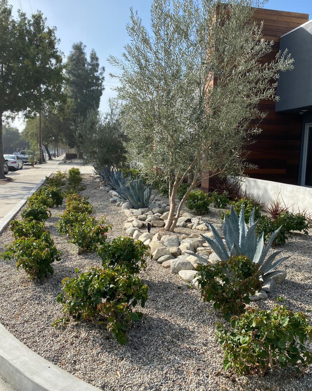 Garden design with trees an shrubs