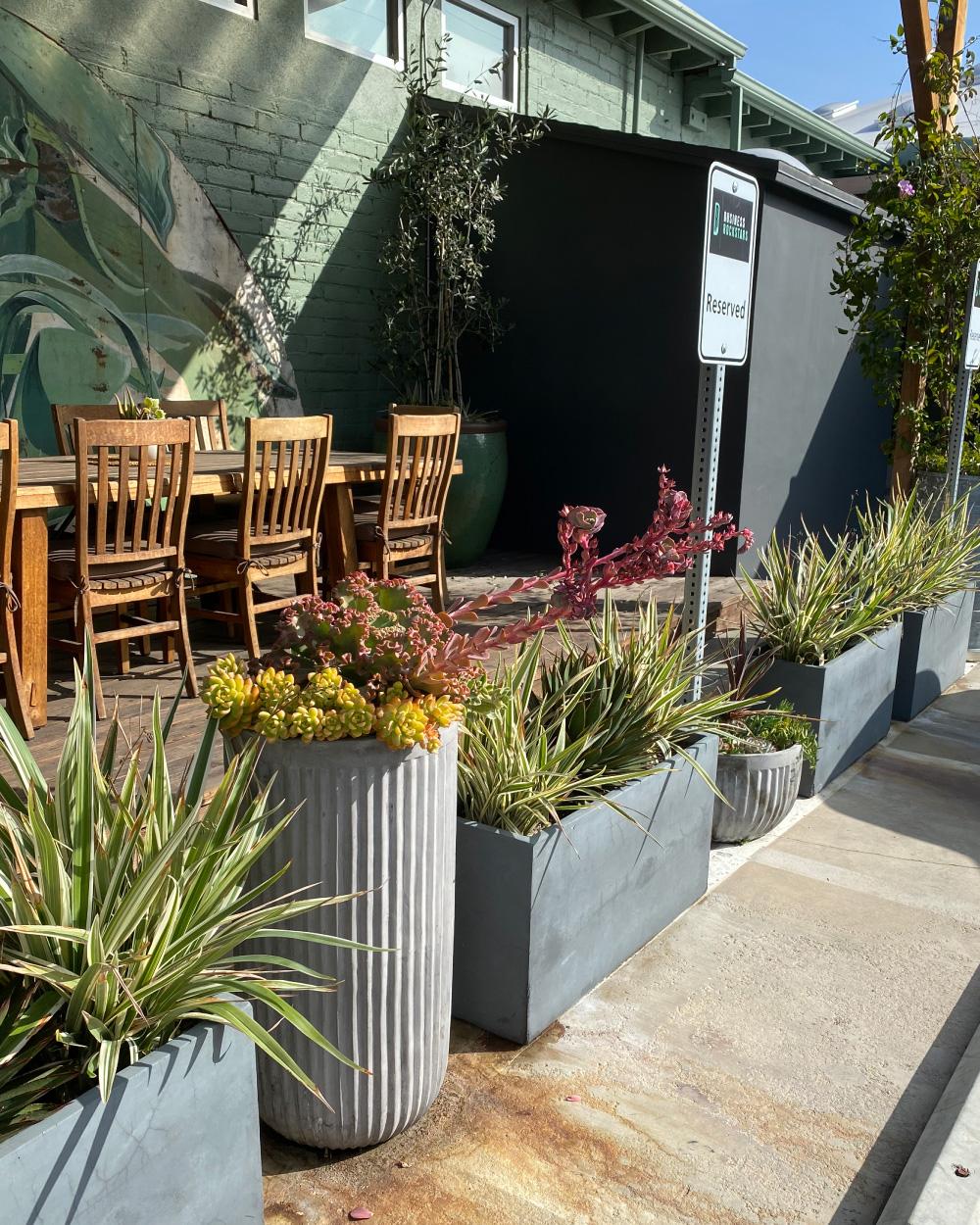 Outdoor plants arranged together