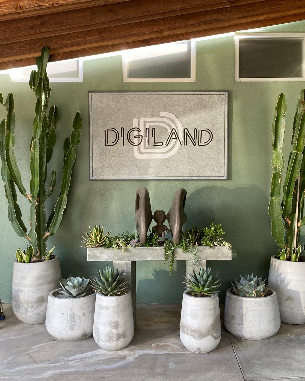 Arrangement of potted plants