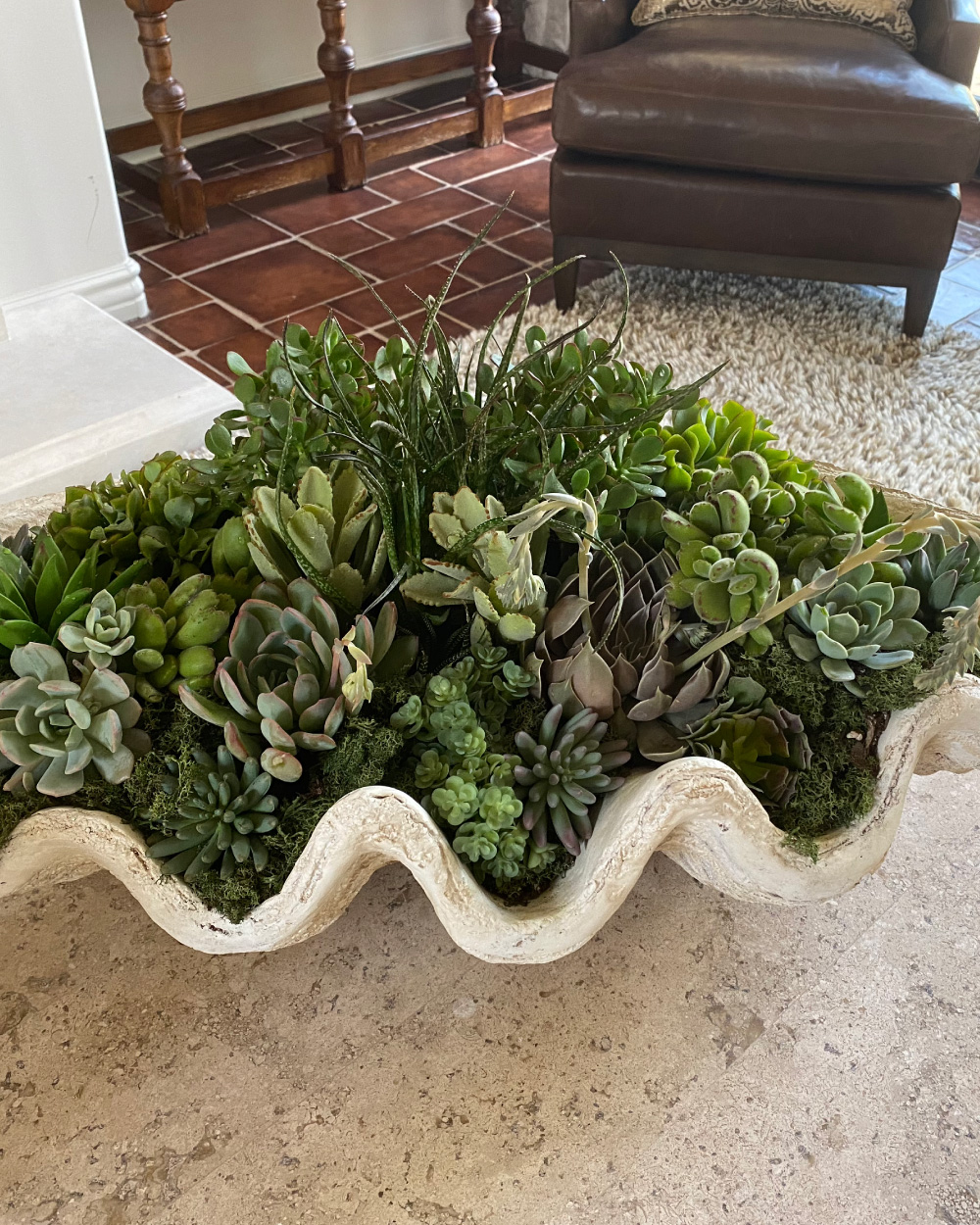 Succulents in clam shell shaped planter