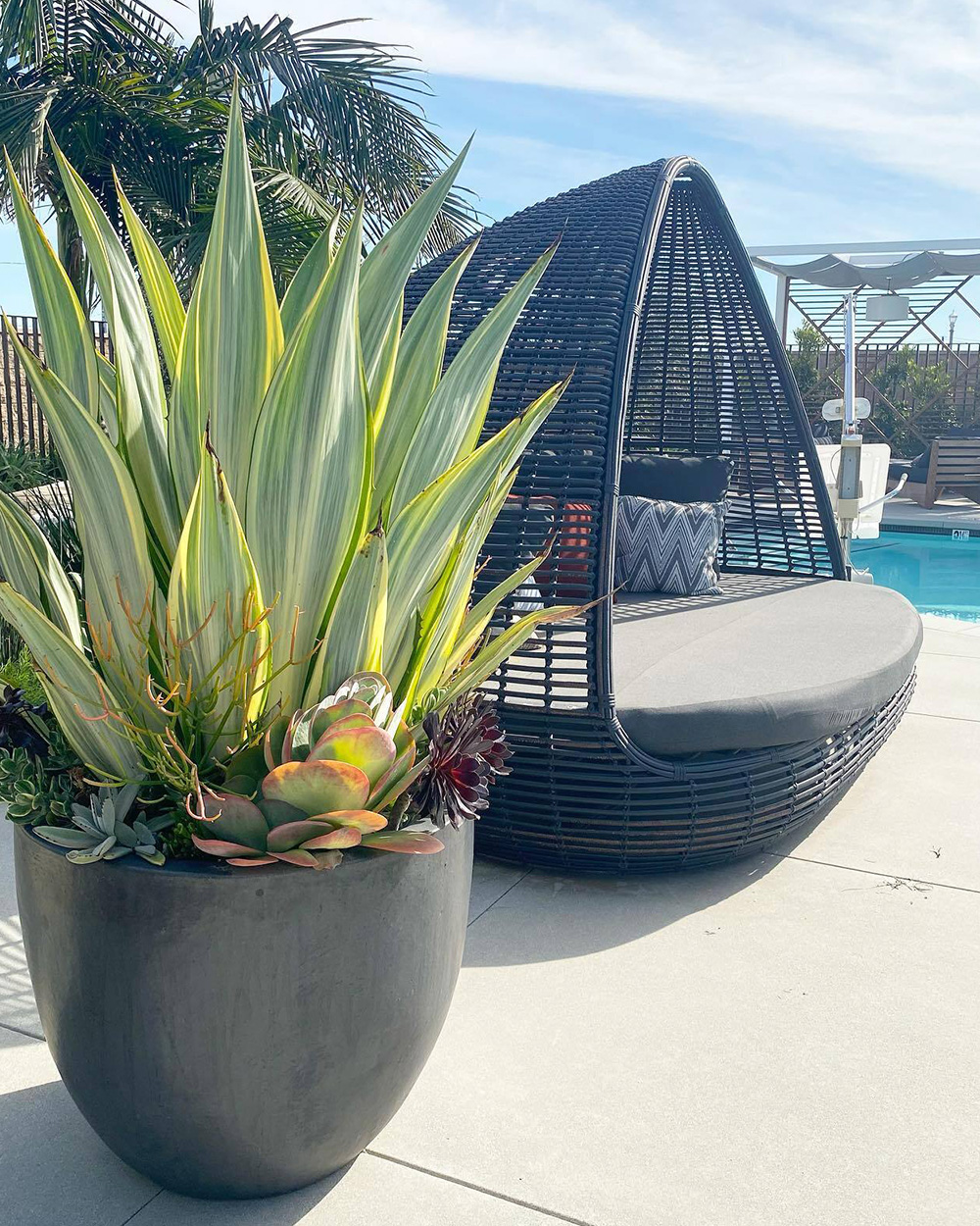 Succulents and poolside furniture