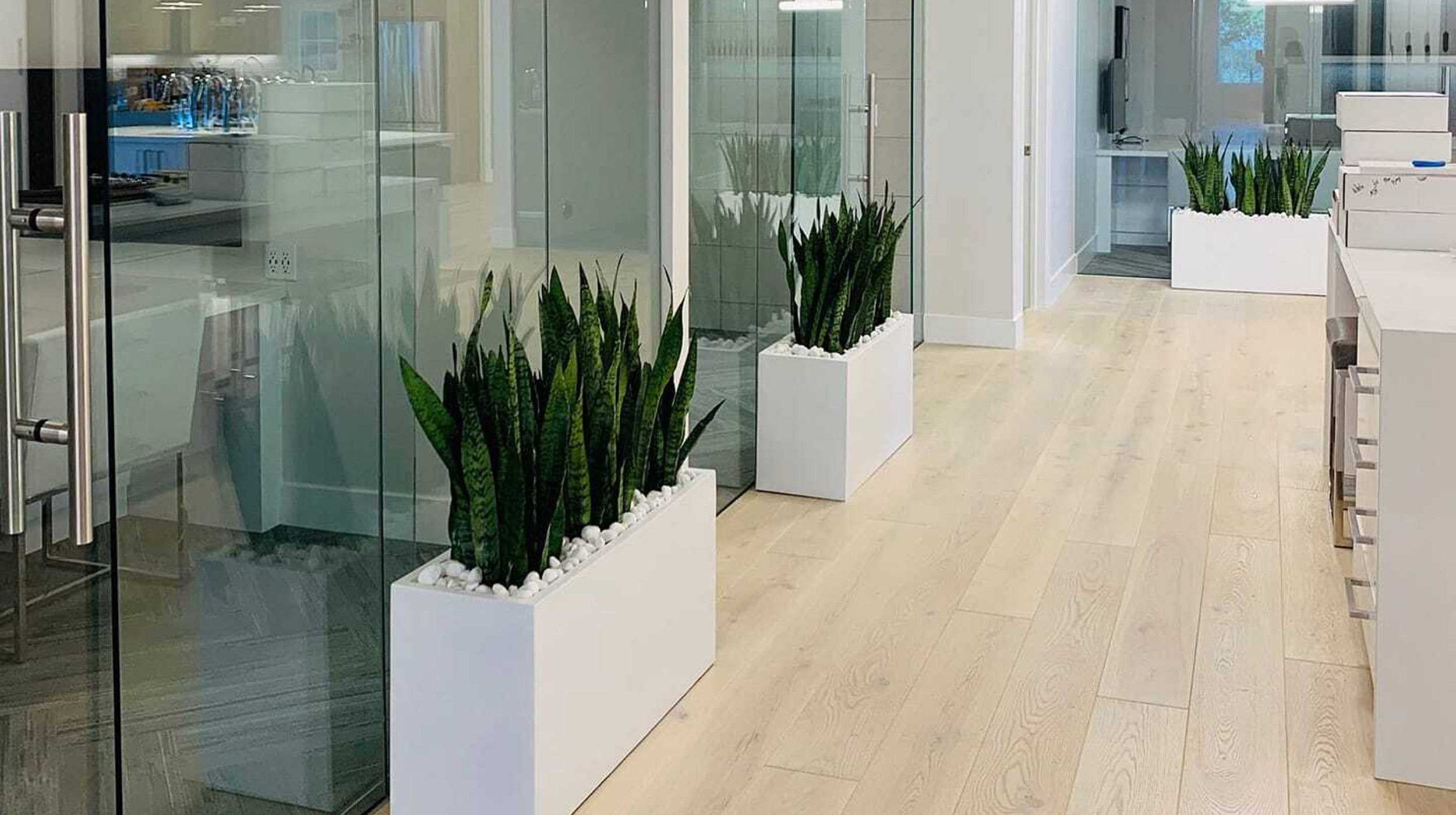 Potted plants line an office hallway