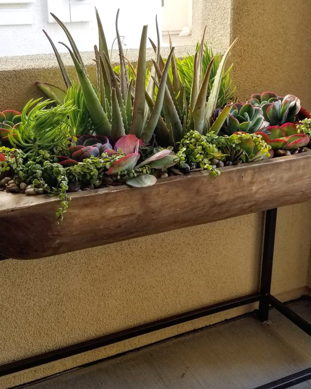 Wooden trough with plants